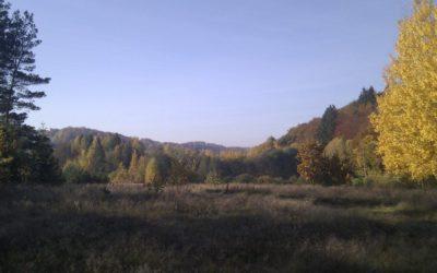 Jesienny widok na działkę – tu powstanie Dom na łące