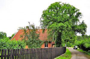 Drzewo, dom, samochód - właściwe proporcje