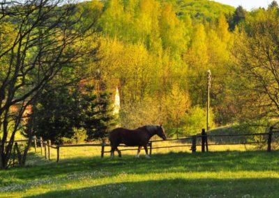 Konie5